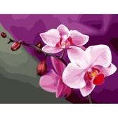 Розовые орхидеи, 40х50см