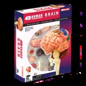 Объемная анатомическая модель Мозг человека