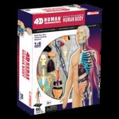 Объемная анатомическая модель Тело человека