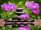 Лиловые орхидеи, 30х40см