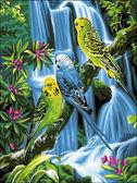 Волнистые попугайчики, 30х40см