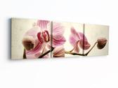 Триптих. Розовые орхидеи, 50 х 150 см