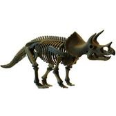 Скелет динозавра - Трицератопс