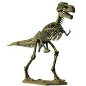 Скелет динозавра - Тираннозавр